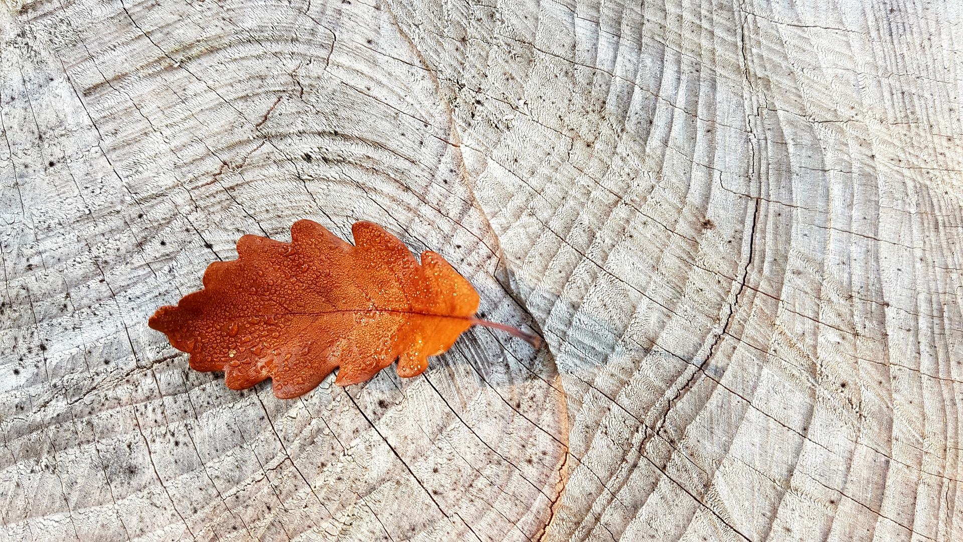 autumn-2815427_1920